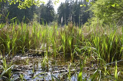 Wetland Project - Online slow radio broadcast
